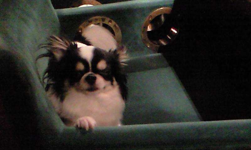 今日はマスコット犬います(^-^)/
